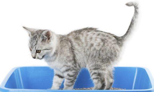 Esenciales para gatos