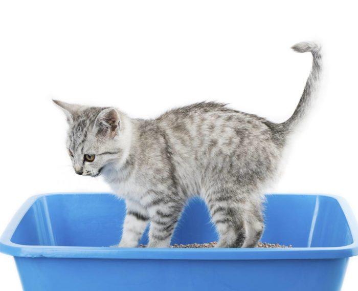 arenero gato