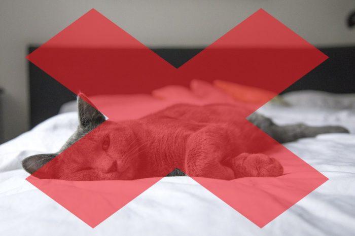 No dormir con el gato reduce los síntomas de la alergia