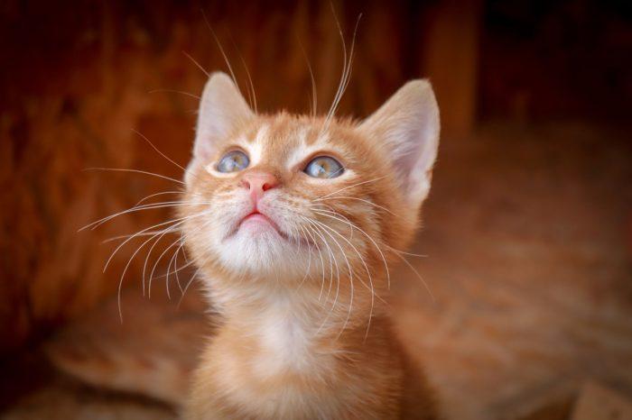 Los gatos tienen propiedades curativas
