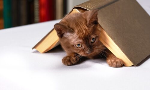 Casas y camas para gatos