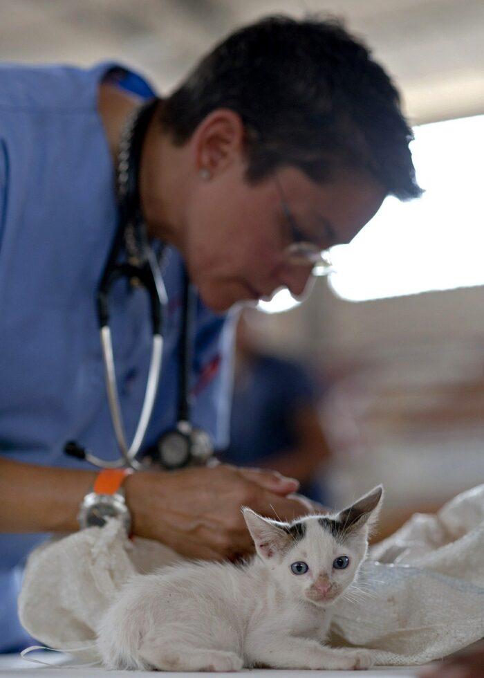 Gatito en veterinario