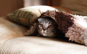 Casas y camas de gatos