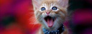 poner cascabel a los gatos